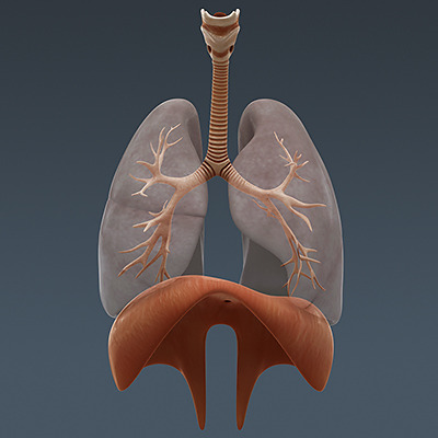 The Respiratory System - Cork Water Safety