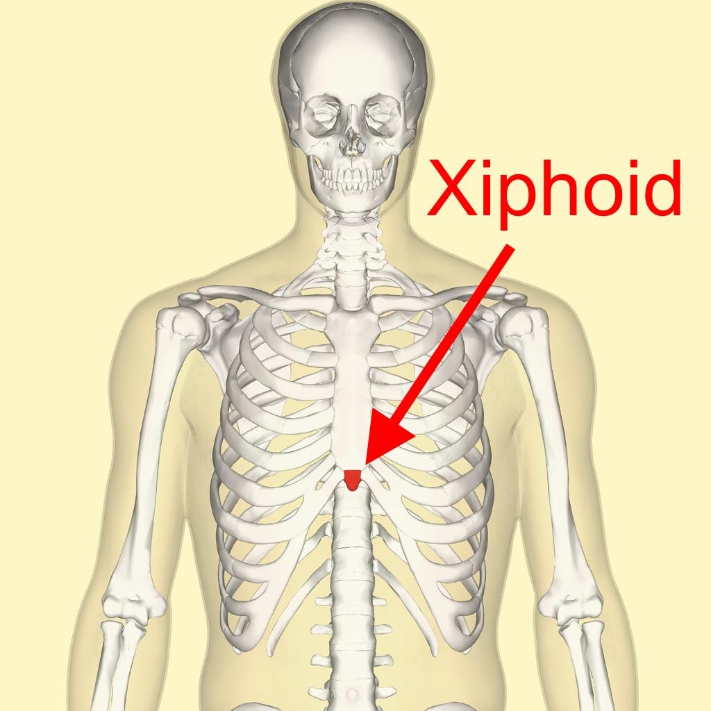 xiphoid
